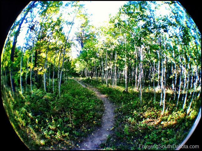 photo of aspen Rimrock Trail Spearfish Canyon, South Dakota Black Hills