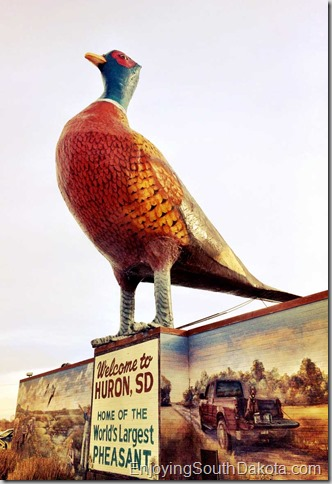 Huron sd has the worlds largest pheasant be sure to see it